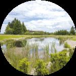 Ein kleiner Teich inmitten eines grünen Parks